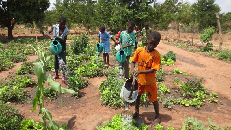 Logofourossou Schulgarten in Burkina Faso